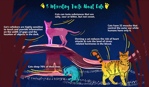 5 facts about cats